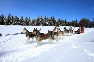 Les balades en chiens de traîneaux à Formiguères