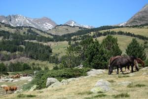 Découvrez les sites de randonnées des Pyrénées-Catalanes