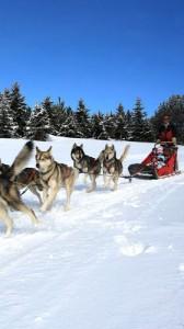 faire des balades en chiens de traîneaux à Formiguères