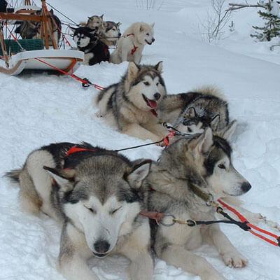 Balades en chiens de traîneaux à Formiguères