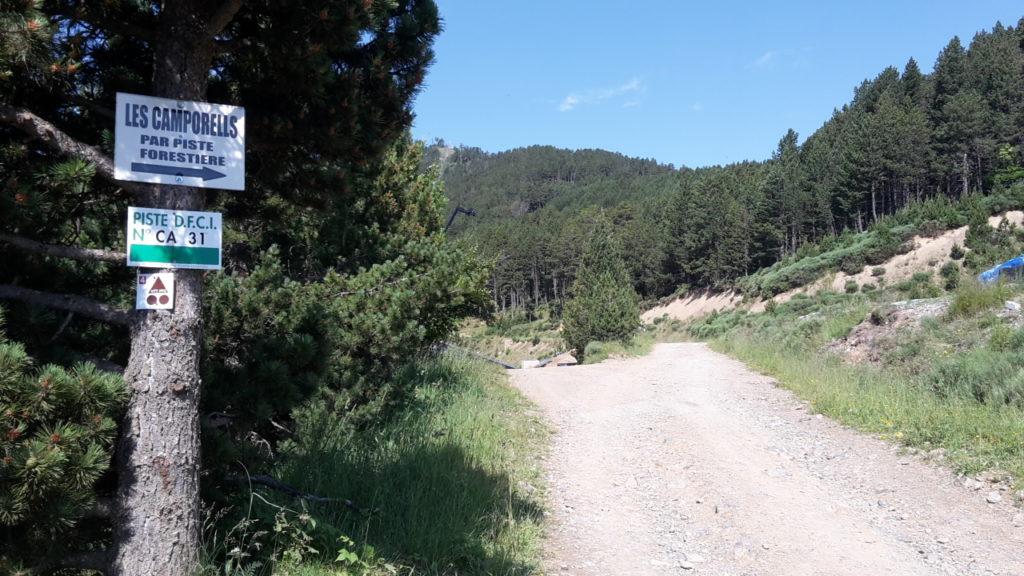 piste forestière